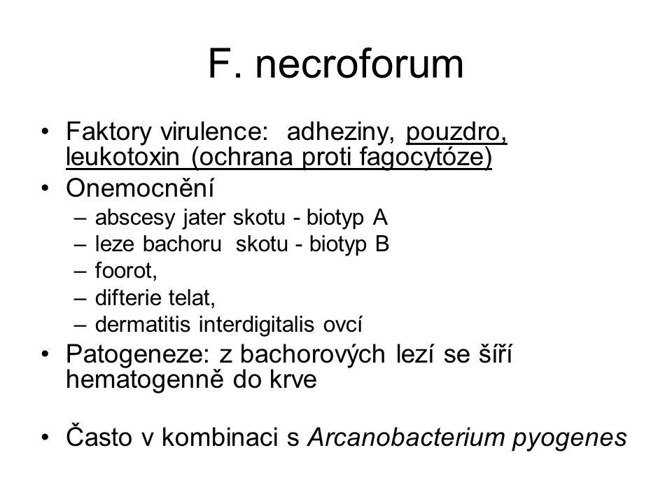 F. necroforum Faktory virulence: adheziny, pouzdro, leukotoxin (ochrana proti fagocytóze) Onemocnění –abscesy jater skotu - biotyp A –leze bachoru sko