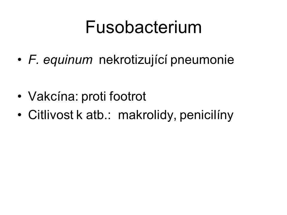 Fusobacterium F. equinum nekrotizující pneumonie Vakcína: proti footrot Citlivost k atb.: makrolidy, penicilíny