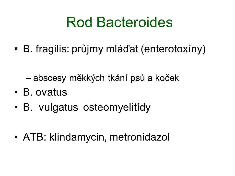 Rod Bacteroides B. fragilis: průjmy mláďat (enterotoxíny) –abscesy měkkých tkání psů a koček B. ovatus B. vulgatus osteomyelitídy ATB: klindamycin, me