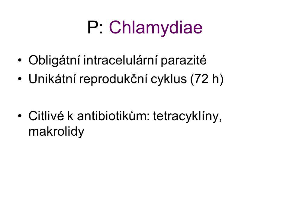 P: Chlamydiae Obligátní intracelulární parazité Unikátní reprodukční cyklus (72 h) Citlivé k antibiotikům: tetracyklíny, makrolidy