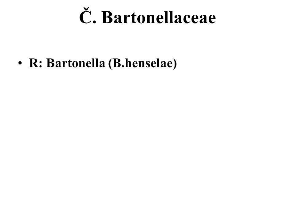 Č. Bartonellaceae R: Bartonella (B.henselae)
