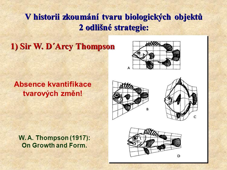 V historii zkoumání tvaru biologických objektů 2 odlišné strategie: V historii zkoumání tvaru biologických objektů 2 odlišné strategie: 2) Tradiční morfometrie: F.