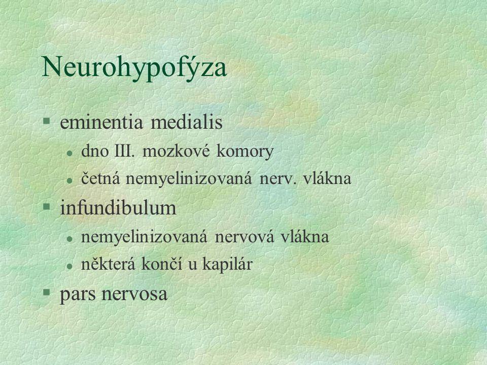 Neurohypofýza §eminentia medialis l dno III. mozkové komory l četná nemyelinizovaná nerv. vlákna §infundibulum l nemyelinizovaná nervová vlákna l někt
