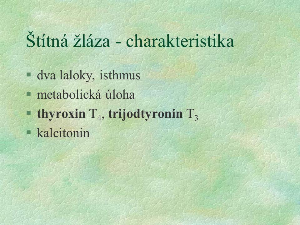 Štítná žláza - charakteristika §dva laloky, isthmus §metabolická úloha §thyroxin T 4, trijodtyronin T 3 §kalcitonin