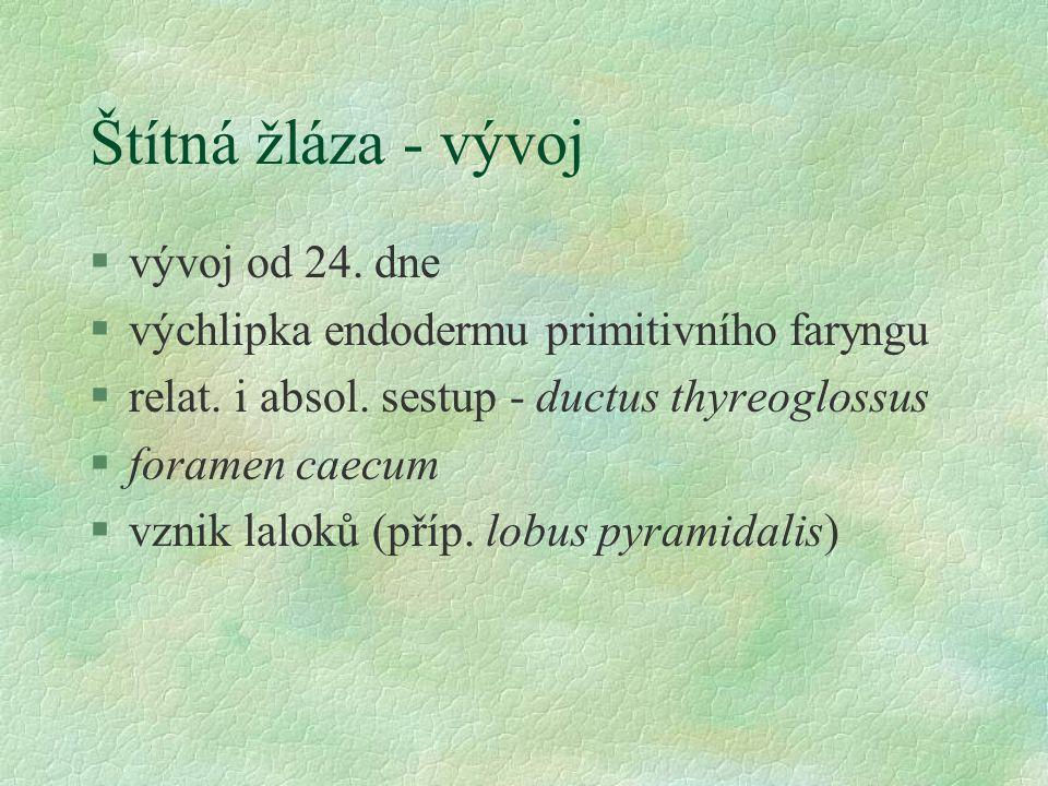 Štítná žláza - vývoj §vývoj od 24. dne §výchlipka endodermu primitivního faryngu §relat. i absol. sestup - ductus thyreoglossus §foramen caecum §vznik