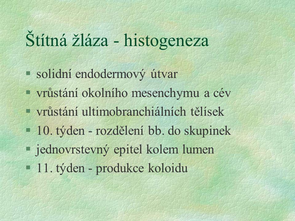 Štítná žláza - histogeneza §solidní endodermový útvar §vrůstání okolního mesenchymu a cév §vrůstání ultimobranchiálních tělísek §10. týden - rozdělení