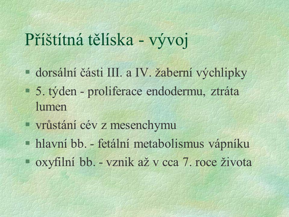 Příštítná tělíska - vývoj §dorsální části III. a IV. žaberní výchlipky §5. týden - proliferace endodermu, ztráta lumen §vrůstání cév z mesenchymu §hla
