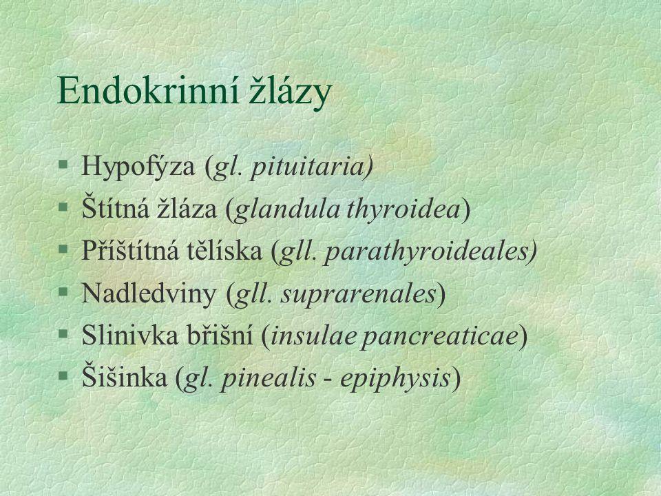 Endokrinní žlázy §Hypofýza (gl. pituitaria) §Štítná žláza (glandula thyroidea) §Příštítná tělíska (gll. parathyroideales) §Nadledviny (gll. suprarenal