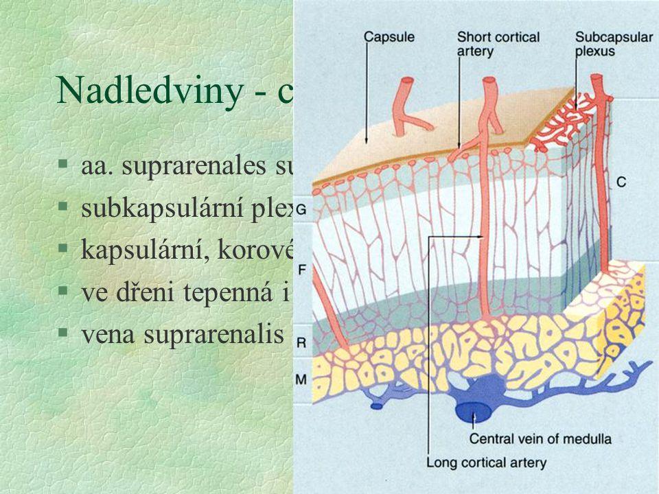 Nadledviny - cévní zásobení §aa. suprarenales sup., mediae et inf. §subkapsulární plexus §kapsulární, korové a dřeňové tepny §ve dřeni tepenná i žilní