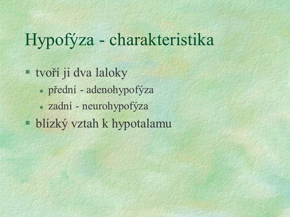 Hypofýza - charakteristika §tvoří ji dva laloky l přední - adenohypofýza l zadní - neurohypofýza §blízký vztah k hypotalamu