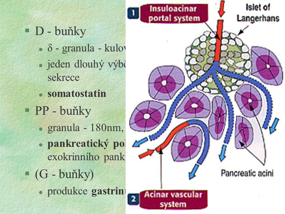 §D - buňky l δ - granula - kulov. 250nm, vyplněná zcela l jeden dlouhý výběžek buněk - parakrinní sekrece l somatostatin §PP - buňky l granula - 180nm