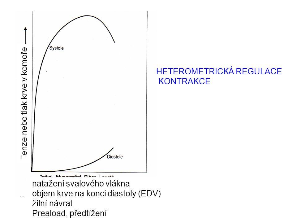 Tenze nebo tlak krve v komoře natažení svalového vlákna objem krve na konci diastoly (EDV) žilní návrat Preaload, předtížení HETEROMETRICKÁ REGULACE K