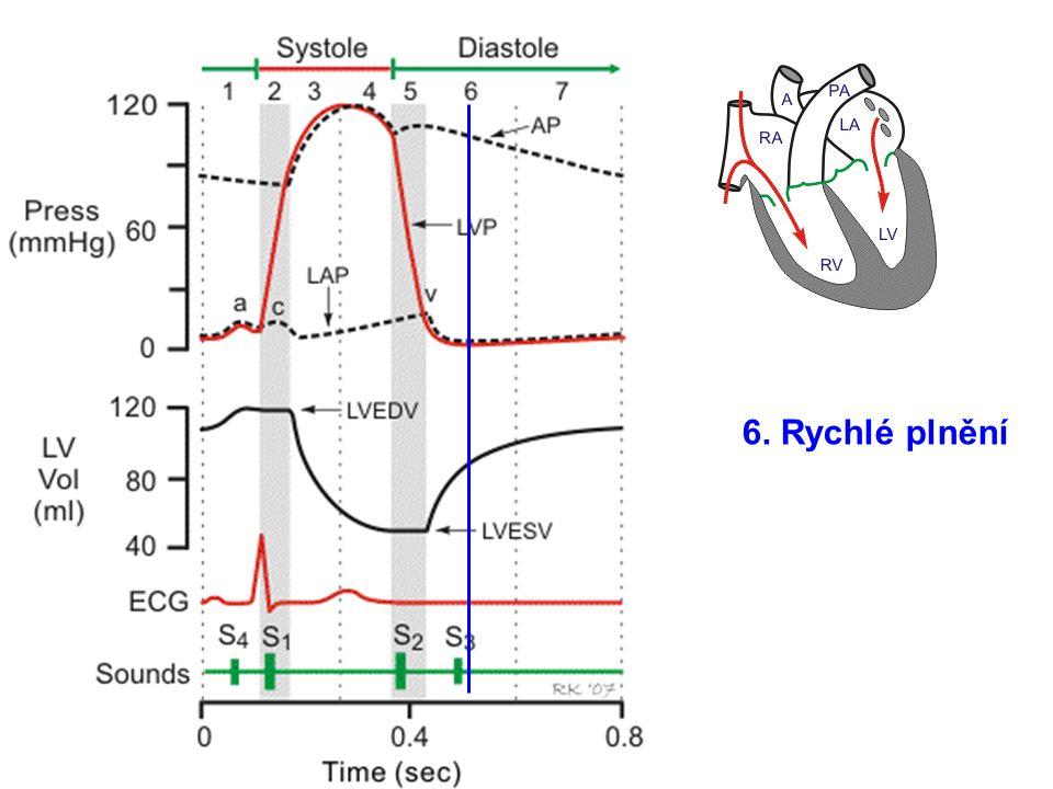Tenze nebo tlak krve v komoře natažení svalového vlákna objem krve na konci diastoly (EDV) žilní návrat Preaload, předtížení HETEROMETRICKÁ REGULACE KONTRAKCE
