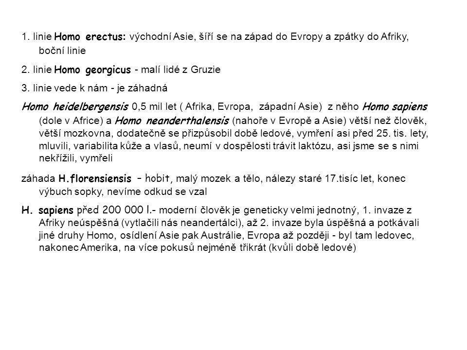 1. linie Homo erectus : východní Asie, šíří se na západ do Evropy a zpátky do Afriky, boční linie 2. linie Homo georgicus - malí lidé z Gruzie 3. lini
