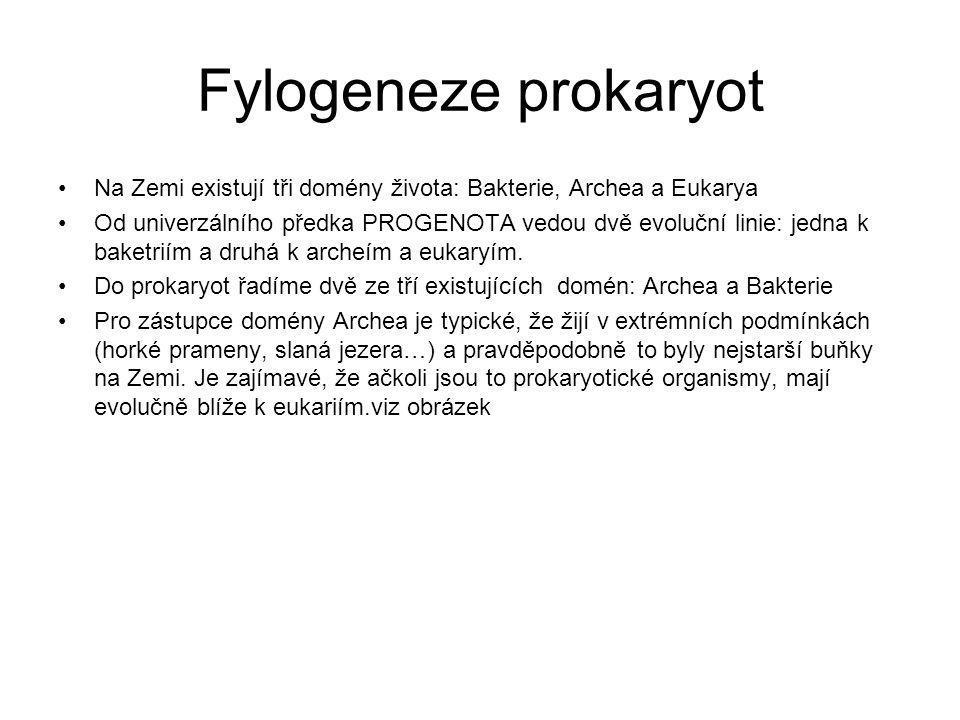 Fylogeneze prokaryot Na Zemi existují tři domény života: Bakterie, Archea a Eukarya Od univerzálního předka PROGENOTA vedou dvě evoluční linie: jedna