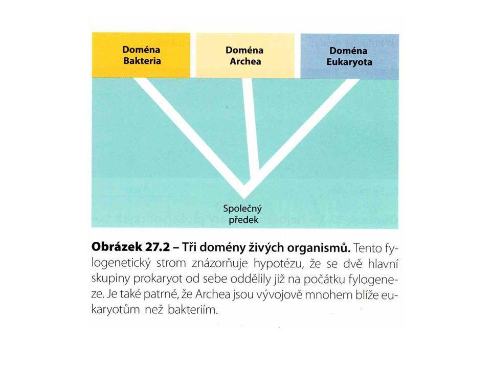 Vznik eukaryot Hlavním motorem vzniku je endosymbióza.