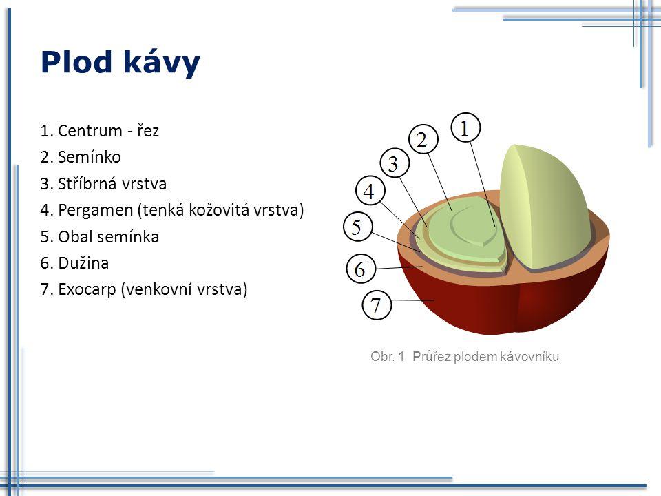 Plod kávy 1. Centrum - řez 2. Semínko 3. Stříbrná vrstva 4. Pergamen (tenká kožovitá vrstva) 5. Obal semínka 6. Dužina 7. Exocarp (venkovní vrstva) Ob