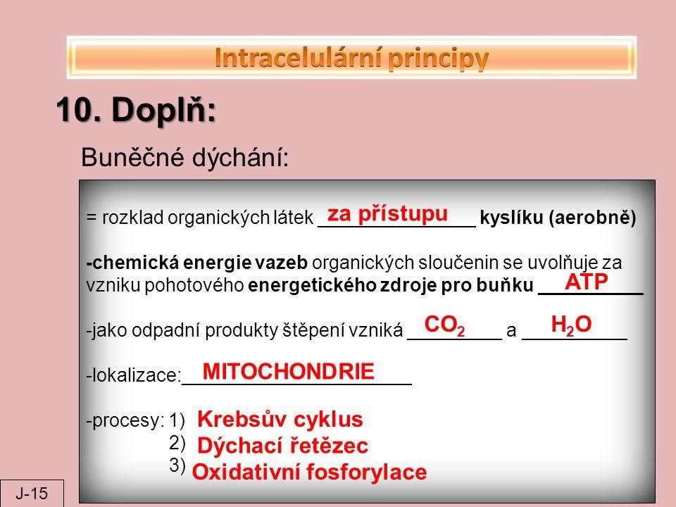 10. Doplň: = rozklad organických látek _______________ kyslíku (aerobně) -chemická energie vazeb organických sloučenin se uvolňuje za vzniku pohotovéh