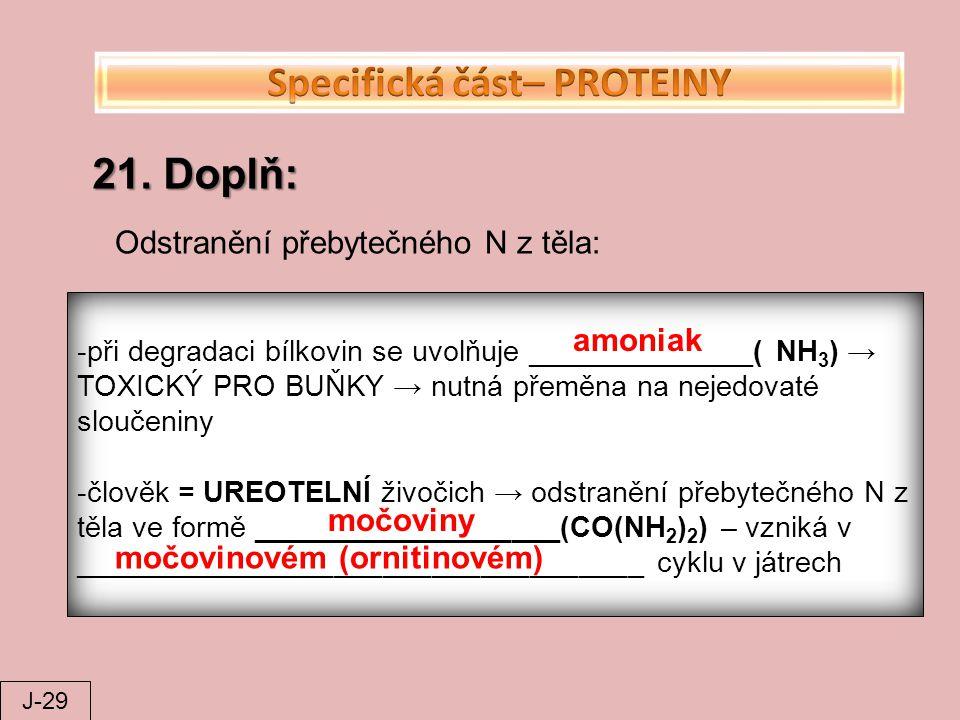 21. Doplň: Odstranění přebytečného N z těla: -při degradaci bílkovin se uvolňuje ______________( NH 3 ) → TOXICKÝ PRO BUŇKY → nutná přeměna na nejedov