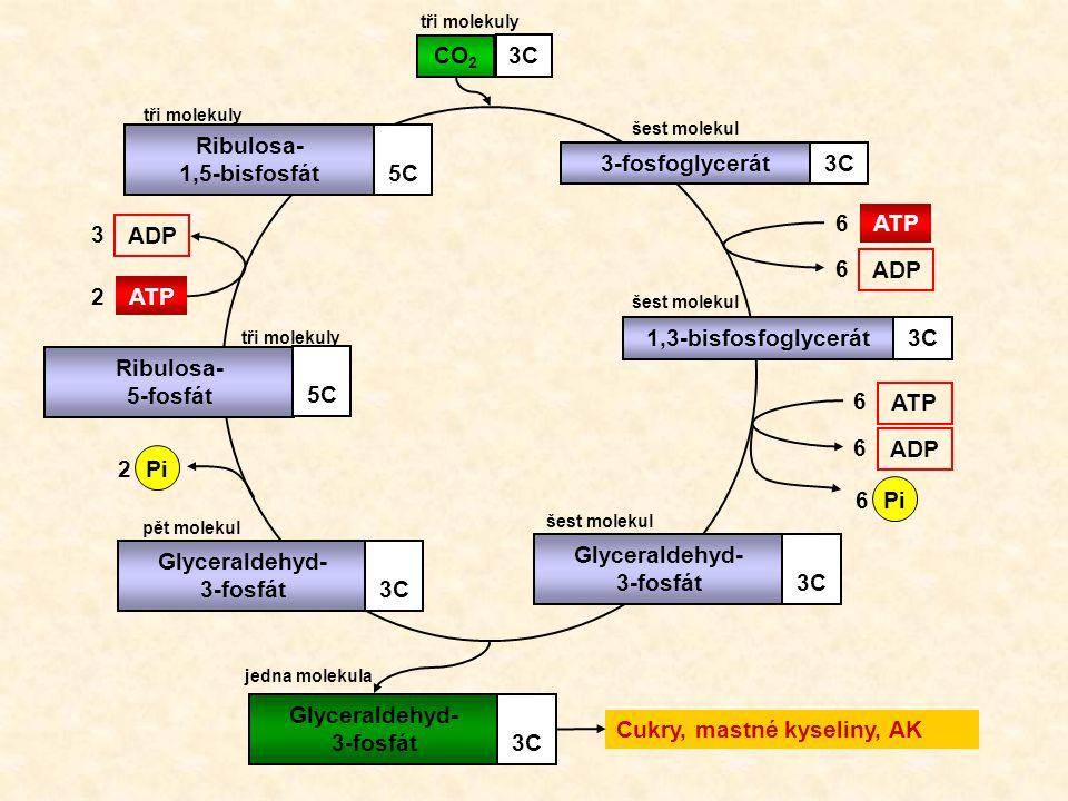 3-fosfoglycerát3C1,3-bisfosfoglycerát3CGlyceraldehyd- 3-fosfát3C Glyceraldehyd- 3-fosfát3C Ribulosa- 5-fosfát 5C Ribulosa- 1,5-bisfosfát5C CO 2 3C 6AT