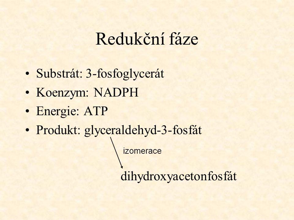 Redukční fáze Substrát: 3-fosfoglycerát Koenzym: NADPH Energie: ATP Produkt: glyceraldehyd-3-fosfát dihydroxyacetonfosfát izomerace