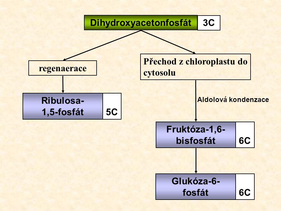 regenaerace Přechod z chloroplastu do cytosolu Ribulosa- 1,5-fosfát5C Fruktóza-1,6- bisfosfát6C Glukóza-6- fosfát6C Dihydroxyacetonfosfát 3C Aldolová