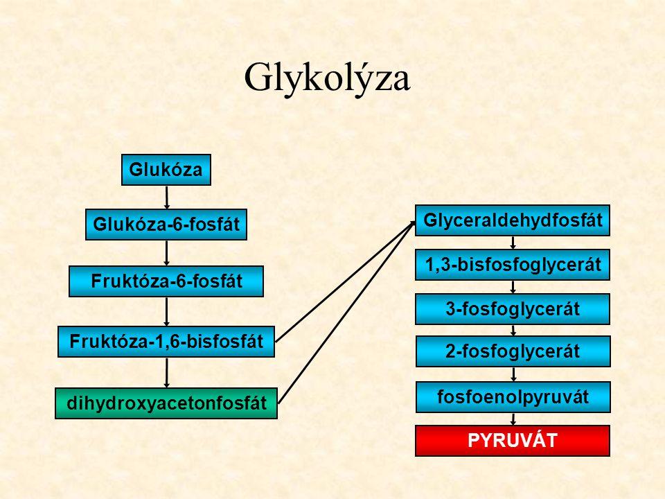 Glykolýza Glukóza Fruktóza-6-fosfát Glukóza-6-fosfát Fruktóza-1,6-bisfosfát dihydroxyacetonfosfát Glyceraldehydfosfát 1,3-bisfosfoglycerát 3-fosfoglyc
