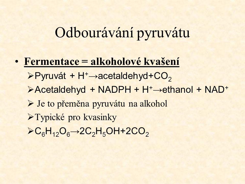 Odbourávání pyruvátu Fermentace = alkoholové kvašení  Pyruvát + H + →acetaldehyd+CO 2  Acetaldehyd + NADPH + H + →ethanol + NAD +  Je to přeměna py