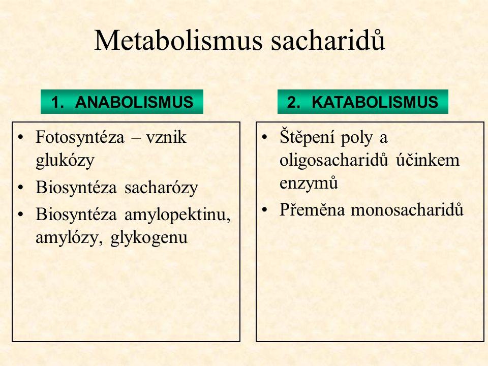 Metabolismus sacharidů Fotosyntéza – vznik glukózy Biosyntéza sacharózy Biosyntéza amylopektinu, amylózy, glykogenu Štěpení poly a oligosacharidů účin