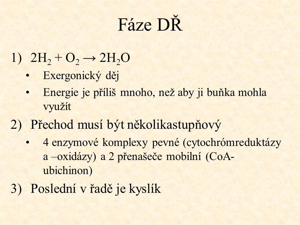 Fáze DŘ 1)2H 2 + O 2 → 2H 2 O Exergonický děj Energie je příliš mnoho, než aby ji buňka mohla využít 2)Přechod musí být několikastupňový 4 enzymové ko