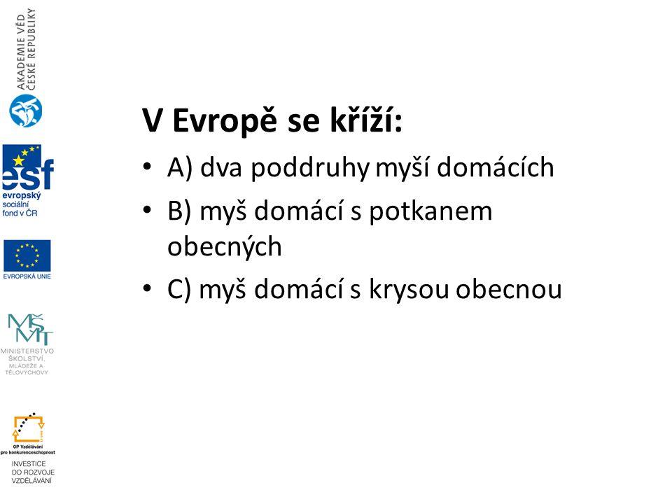 V Evropě se kříží: A) dva poddruhy myší domácích B) myš domácí s potkanem obecných C) myš domácí s krysou obecnou