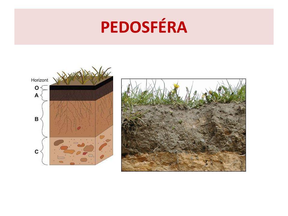 obrázky znázorňují půdní profily půdních typů nivní půda hnědozem černozem