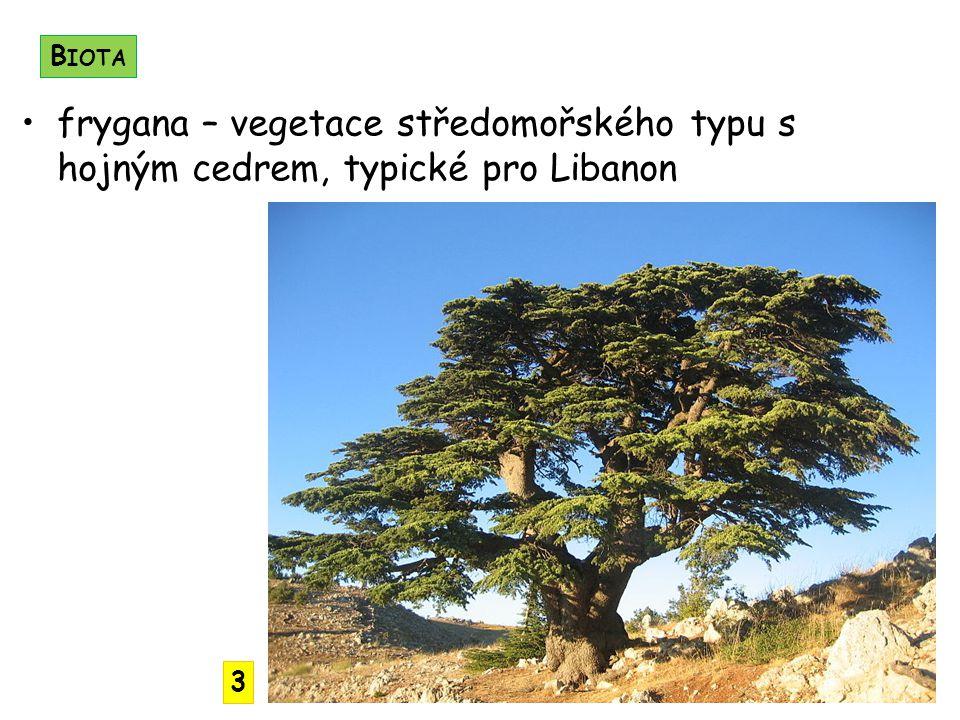 frygana – vegetace středomořského typu s hojným cedrem, typické pro Libanon B IOTA 3