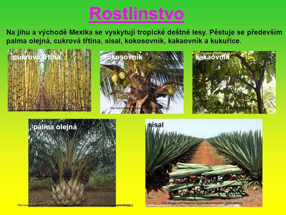 Na jihu a východě Mexika se vyskytují tropické deštné lesy. Pěstuje se především palma olejná, cukrová třtina, sisal, kokosovník, kakaovník a kukuřice