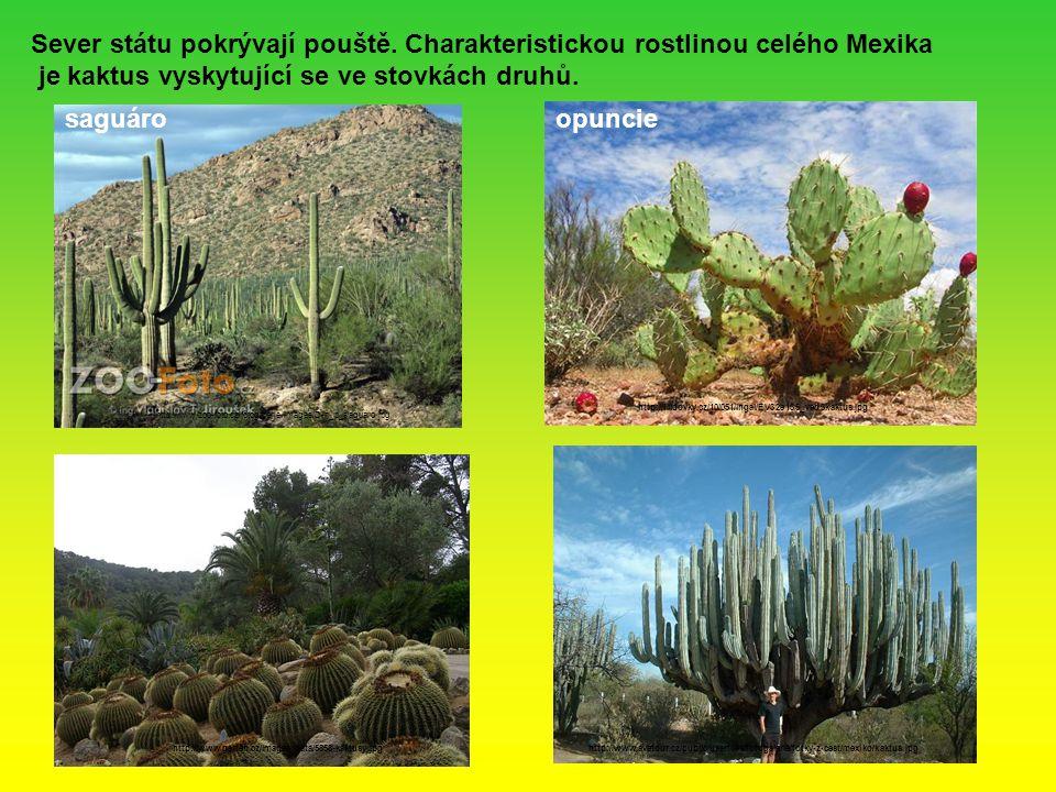 Sever státu pokrývají pouště. Charakteristickou rostlinou celého Mexika je kaktus vyskytující se ve stovkách druhů. saguáro http://www.zoo-foto.cz/fot