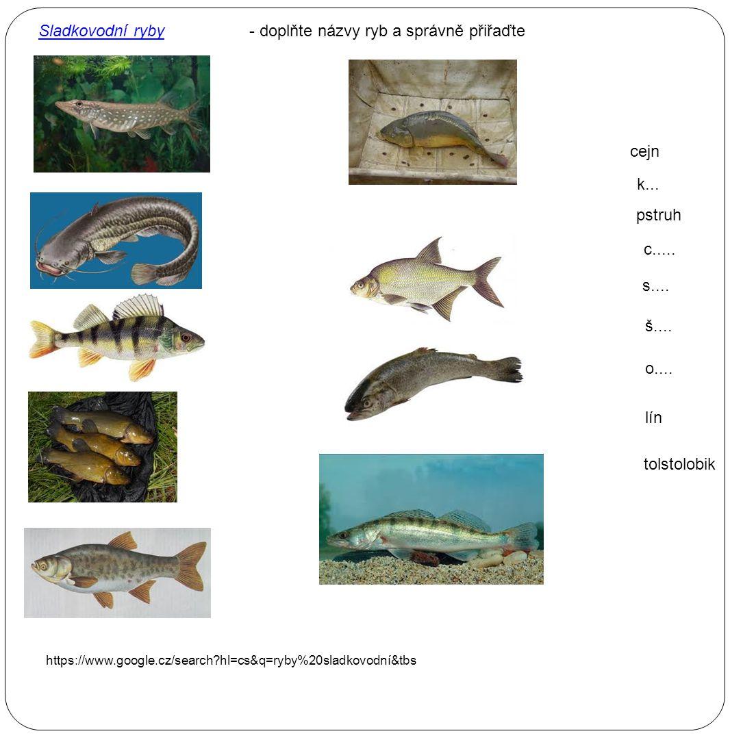 o.... cejn lín c..... s.... pstruh š.... k... Sladkovodní ryby tolstolobik - doplňte názvy ryb a správně přiřaďte https://www.google.cz/search?hl=cs&q