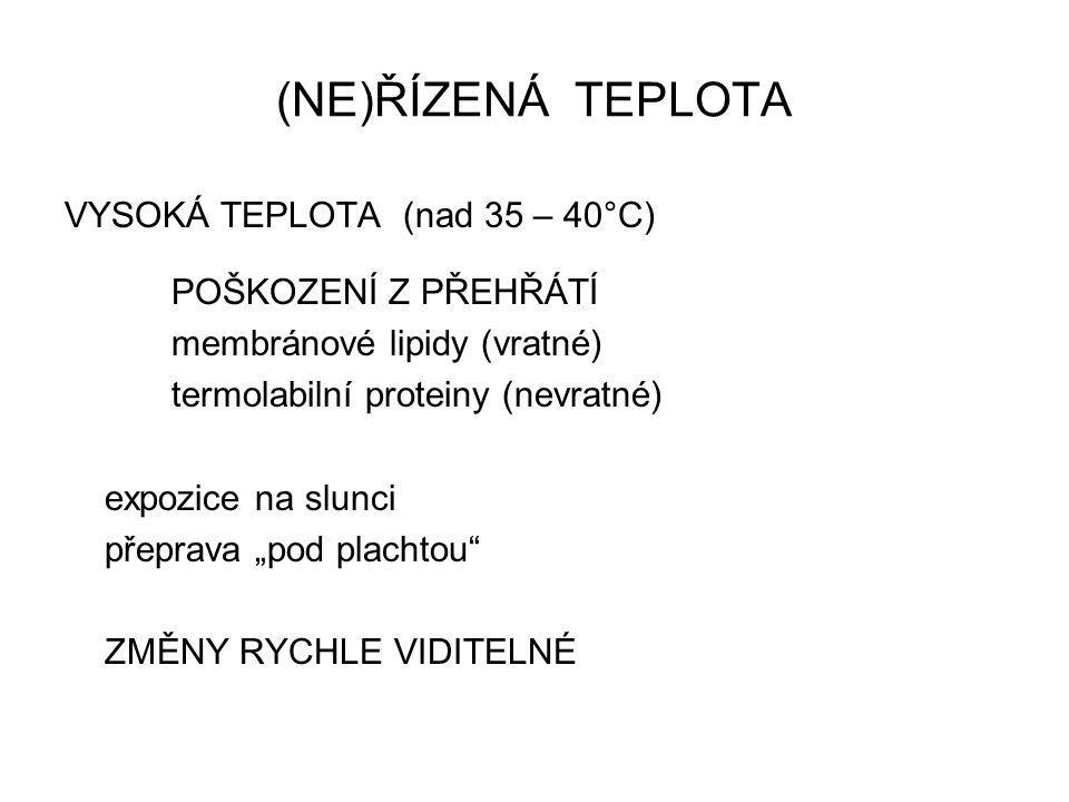(NE)ŘÍZENÁ TEPLOTA VYSOKÁ TEPLOTA (nad 35 – 40°C) POŠKOZENÍ Z PŘEHŘÁTÍ membránové lipidy (vratné) termolabilní proteiny (nevratné) expozice na slunci