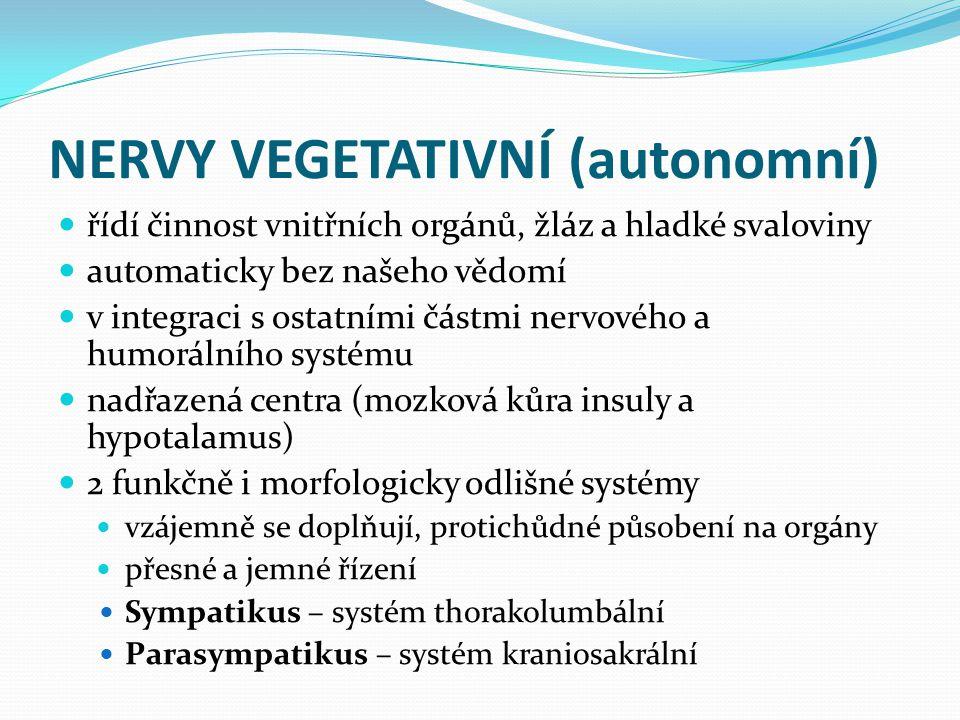 NERVY VEGETATIVNÍ (autonomní) řídí činnost vnitřních orgánů, žláz a hladké svaloviny automaticky bez našeho vědomí v integraci s ostatními částmi nerv