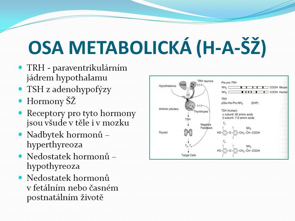 OSA METABOLICKÁ (H-A-ŠŽ) TRH - paraventrikulárním jádrem hypothalamu TSH z adenohypofýzy Hormony ŠŽ Receptory pro tyto hormony jsou všude v těle i v m