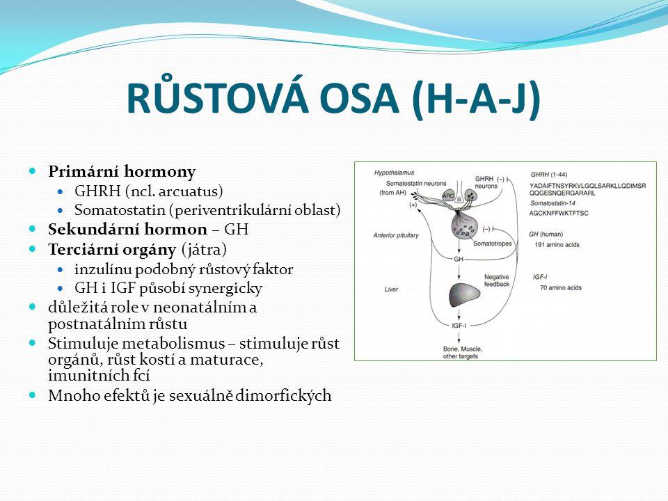 RŮSTOVÁ OSA (H-A-J) Primární hormony GHRH (ncl. arcuatus) Somatostatin (periventrikulární oblast) Sekundární hormon – GH Terciární orgány (játra) inzu