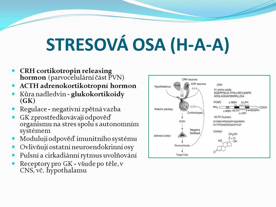 STRESOVÁ OSA (H-A-A) CRH cortikotropin releasing hormon (parvocelulární část PVN) ACTH adrenokortikotropní hormon Kůra nadledvin - glukokortikoidy (GK