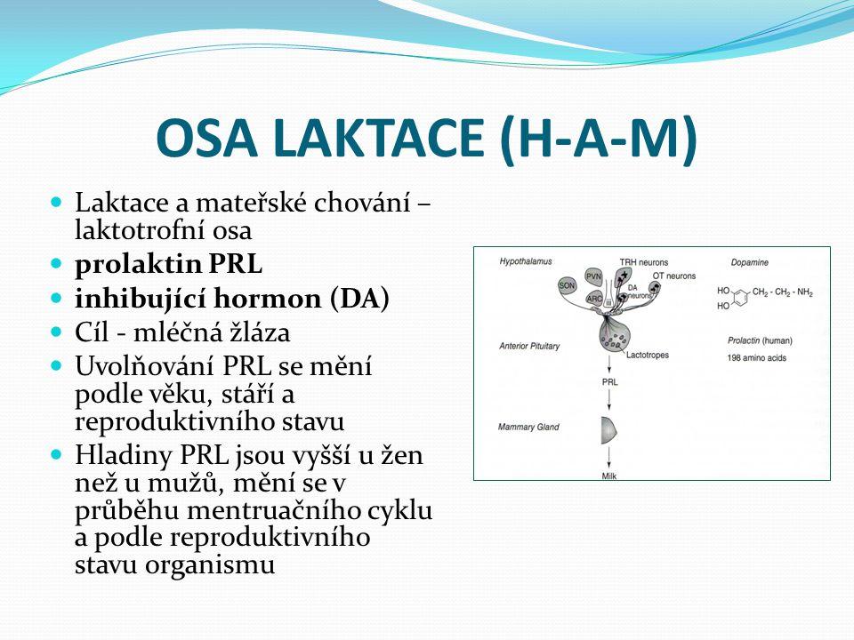 OSA LAKTACE (H-A-M) Laktace a mateřské chování – laktotrofní osa prolaktin PRL inhibující hormon (DA) Cíl - mléčná žláza Uvolňování PRL se mění podle