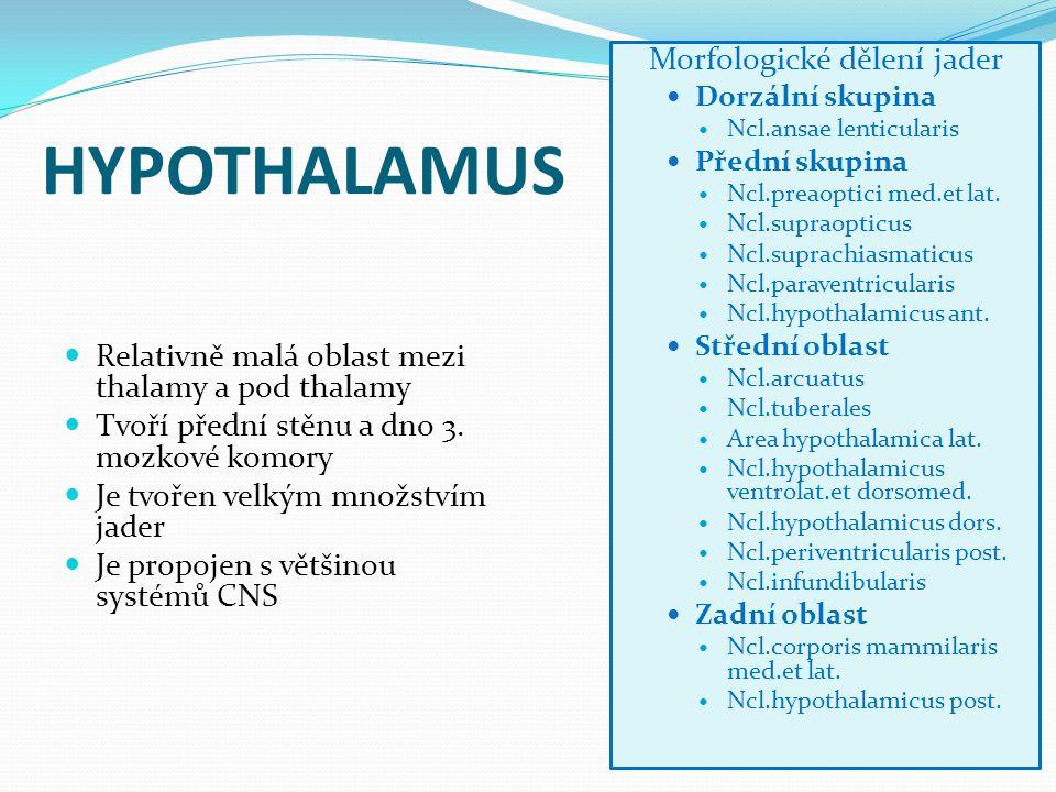 HYPOTHALAMUS Relativně malá oblast mezi thalamy a pod thalamy Tvoří přední stěnu a dno 3. mozkové komory Je tvořen velkým množstvím jader Je propojen