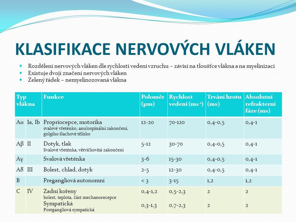 KLASIFIKACE NERVOVÝCH VLÁKEN Typ vlákna FunkcePoloměr (μm) Rychlost vedení (ms -1 ) Trvání hrotu (ms) Absolutní refrakterní fáze (ms) AαAαIa, IbPropriocepce, motorika svalové vřeténko, anulospinální zakončení, golgiho šlachové tělísko 12-2070-1200,4-0,50,4-1 AβAβIIDotyk, tlak Svalové vřeténka, větvičkovitá zakončení 5-1230-700,4-0,50,4-1 AγAγSvalová vřeténka3-615-300,4-0,50,4-1 AδAδIIIBolest, chlad, dotyk2-512-300,4-0,50,4-1 BPregangliová autonomní< 33-151,2 CIVZadní kořeny bolest, teplota, část mechanorecepce Sympatická Postgangliová sympatická 0,4-1,2 0,3-1,3 0,5-2,3 0,7-2,3 2222 2222 Rozdělení nervových vláken dle rychlosti vedení vzruchu – závisí na tloušťce vlákna a na myelinizaci Existuje dvojí značení nervových vláken Zelený řádek – nemyelinozovaná vlákna