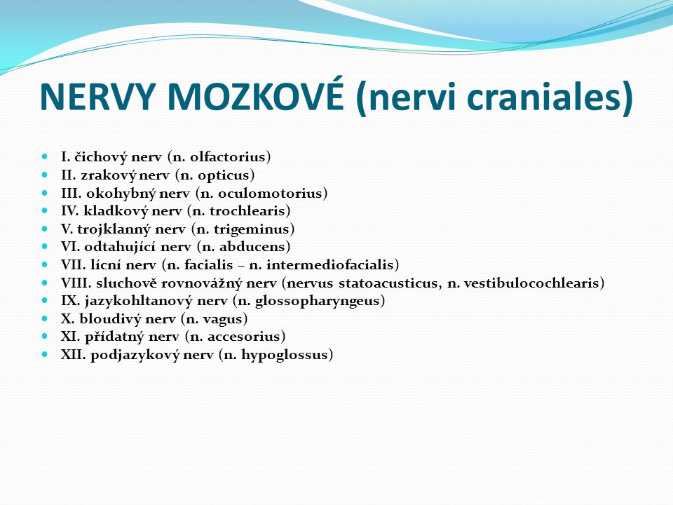 NERVY MOZKOVÉ (nervi craniales) I.čichový nerv (n.