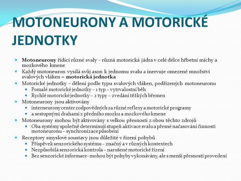 MOTONEURONY A MOTORICKÉ JEDNOTKY Motoneurony řídící různé svaly – různá motorická jádra v celé délce hřbetní míchy a mozkového kmene Každý motoneuron vysílá svůj axon k jednomu svalu a inervuje omezené množství svalových vláken = motorická jednotka Motorické jednotky – dělení podle typu svalových vláken, podřízených motoneuronu Pomalé motorické jednotky – 1 typ – vytrvalostní běh Rychlé motorické jednotky – 2 typy – zvedání těžkých břemen Motoneurony jsou aktivovány interneurony center zodpovědných za různé reflexy a motorické programy a sestupnými drahami z předního mozku a mozkového kmene Motoneurony mohou být aktivovány s velkou přesností z obou těchto zdrojů Oba systémy společně determinují stupeň aktivace svalu a přesné načasování činnosti motoneuronu – synchronizace působení Receptory smyslové soustavy jsou důležité v řízení pohybů Příspěvek senzorického systému – značný a v různých kontextech Nezpůsobilá senzorická kontrola – narušené motorické řízení Bez senzorické informace- mohou být pohyby vykonávány, ale s menší přesností provedení