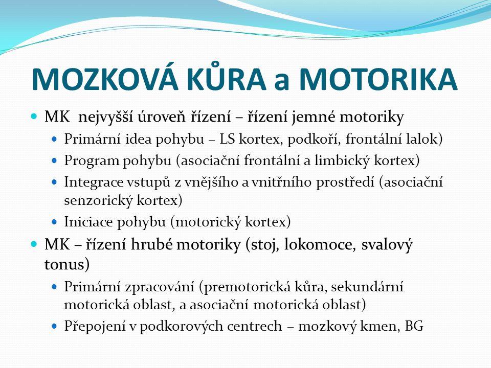 MOZKOVÁ KŮRA a MOTORIKA MK nejvyšší úroveň řízení – řízení jemné motoriky Primární idea pohybu – LS kortex, podkoří, frontální lalok) Program pohybu (asociační frontální a limbický kortex) Integrace vstupů z vnějšího a vnitřního prostředí (asociační senzorický kortex) Iniciace pohybu (motorický kortex) MK – řízení hrubé motoriky (stoj, lokomoce, svalový tonus) Primární zpracování (premotorická kůra, sekundární motorická oblast, a asociační motorická oblast) Přepojení v podkorových centrech – mozkový kmen, BG