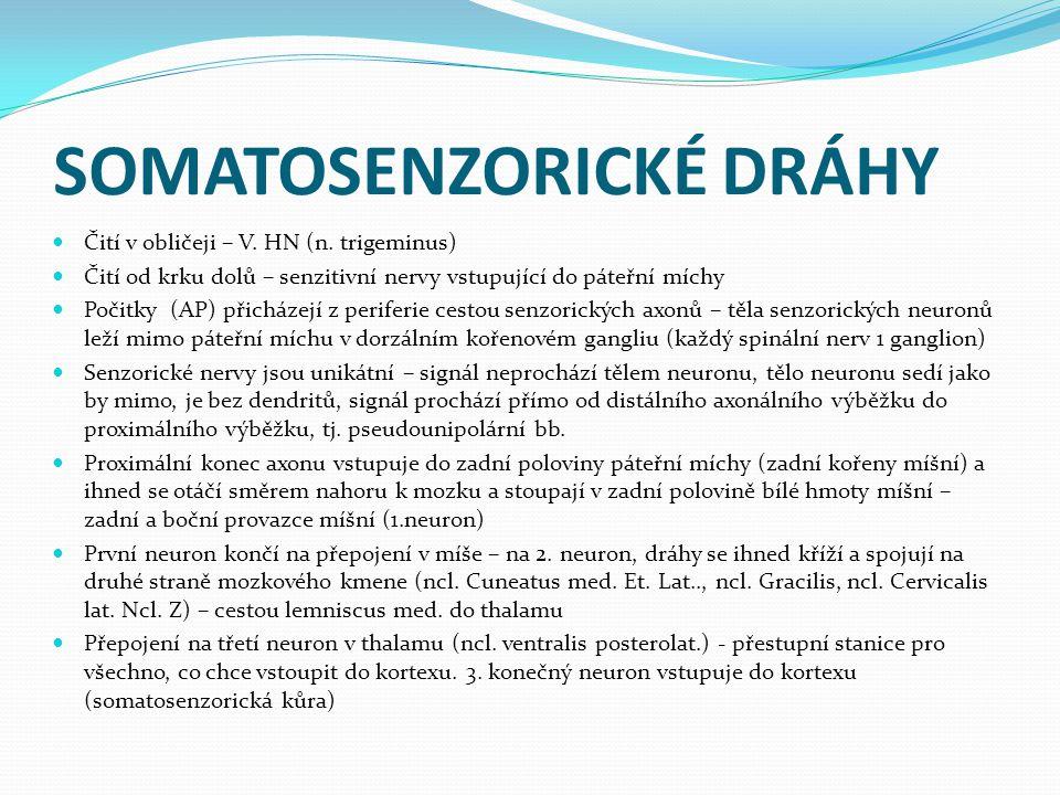 SOMATOSENZORICKÉ DRÁHY Čití v obličeji – V.HN (n.