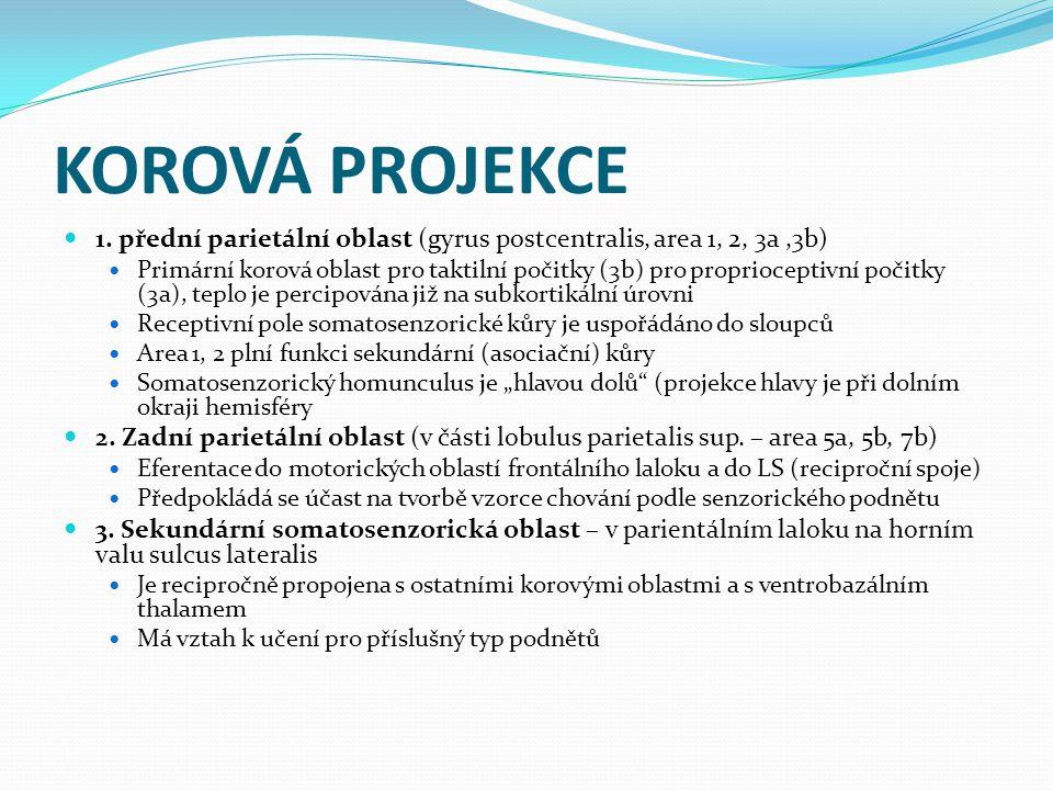 KOROVÁ PROJEKCE 1.
