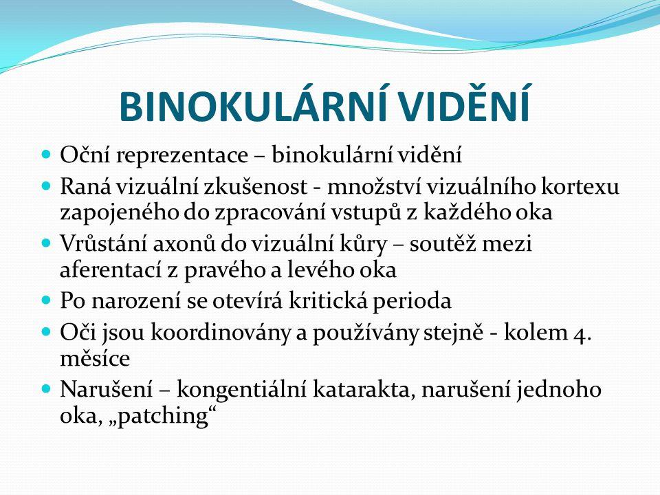 BINOKULÁRNÍ VIDĚNÍ Oční reprezentace – binokulární vidění Raná vizuální zkušenost - množství vizuálního kortexu zapojeného do zpracování vstupů z každ